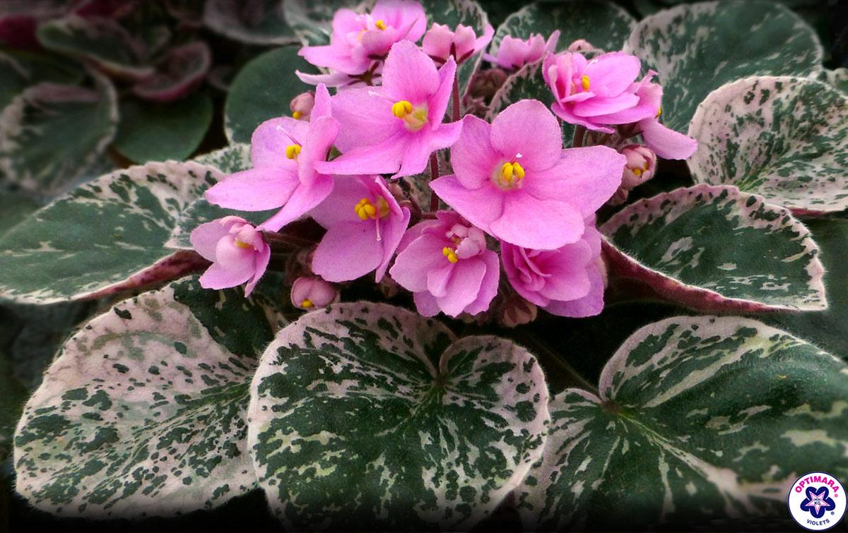 10 Inch White Ceramic Plant Pots Gift Pro 11 1 Inch Long
