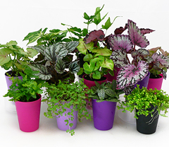 2 In Mini Green Plants With Wick Watering System Set Of 4