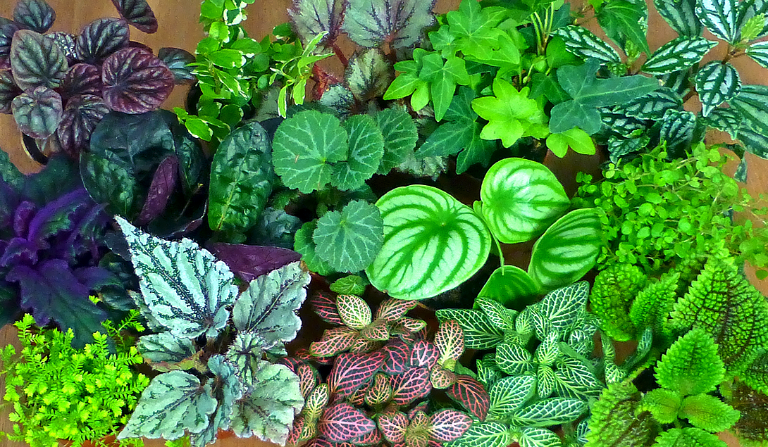 2 IN Mini Green Plants - Set of 4