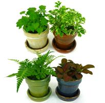 Exotic Foliage Terrarium Plants